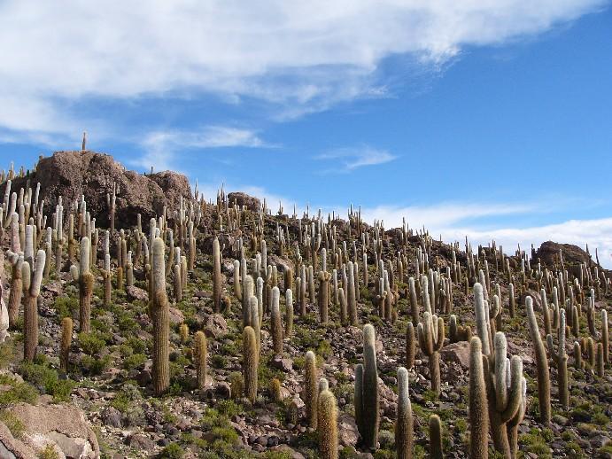 cactus isla pescadores